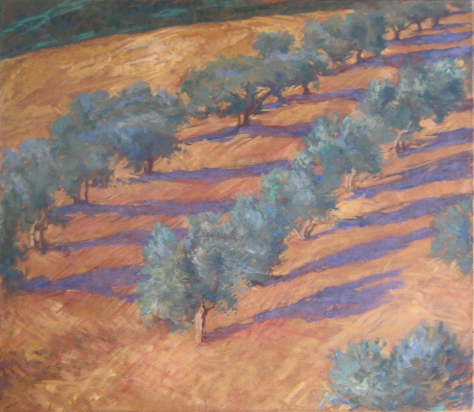 Olive trees, Maremma