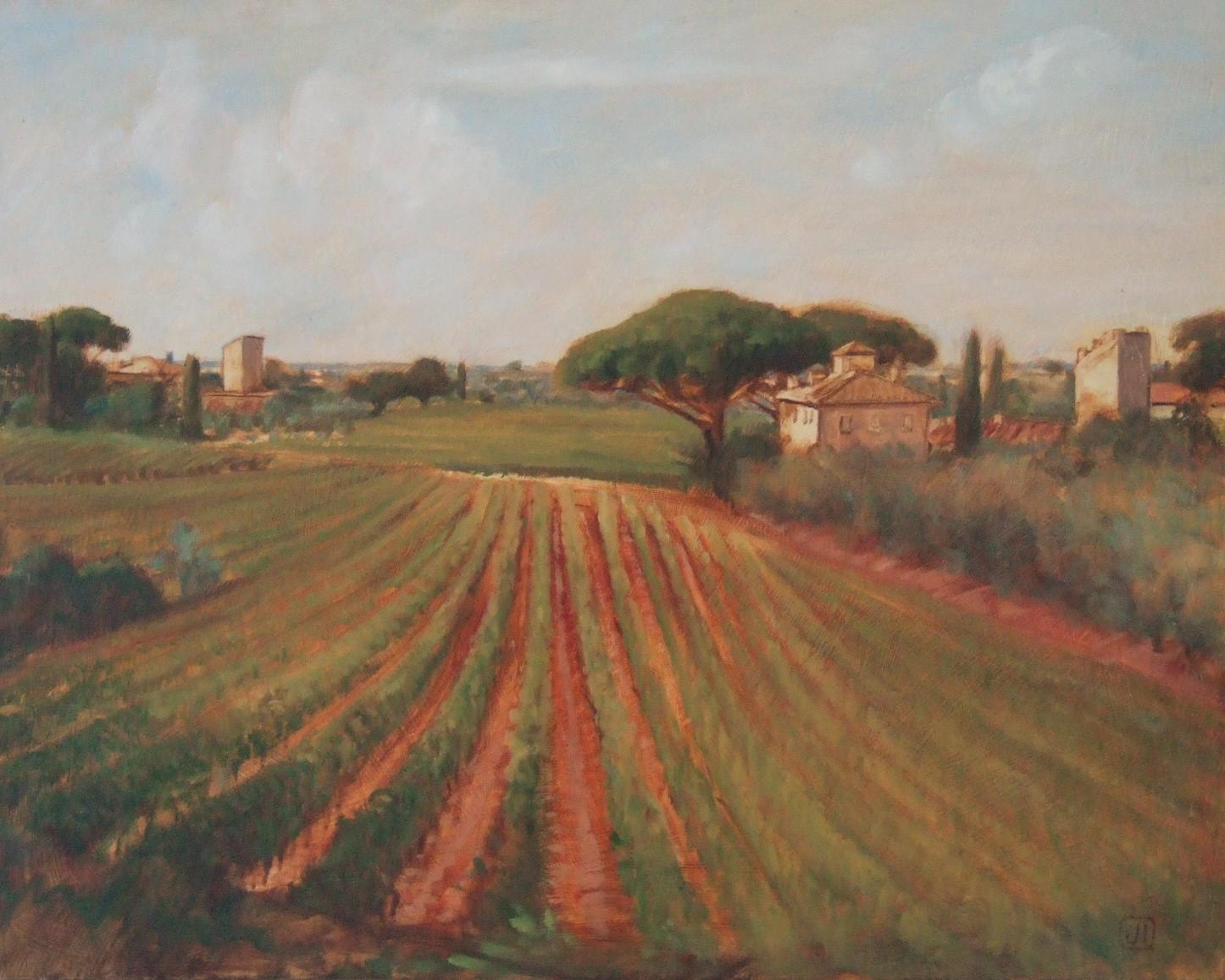 Bolgheri vineyards