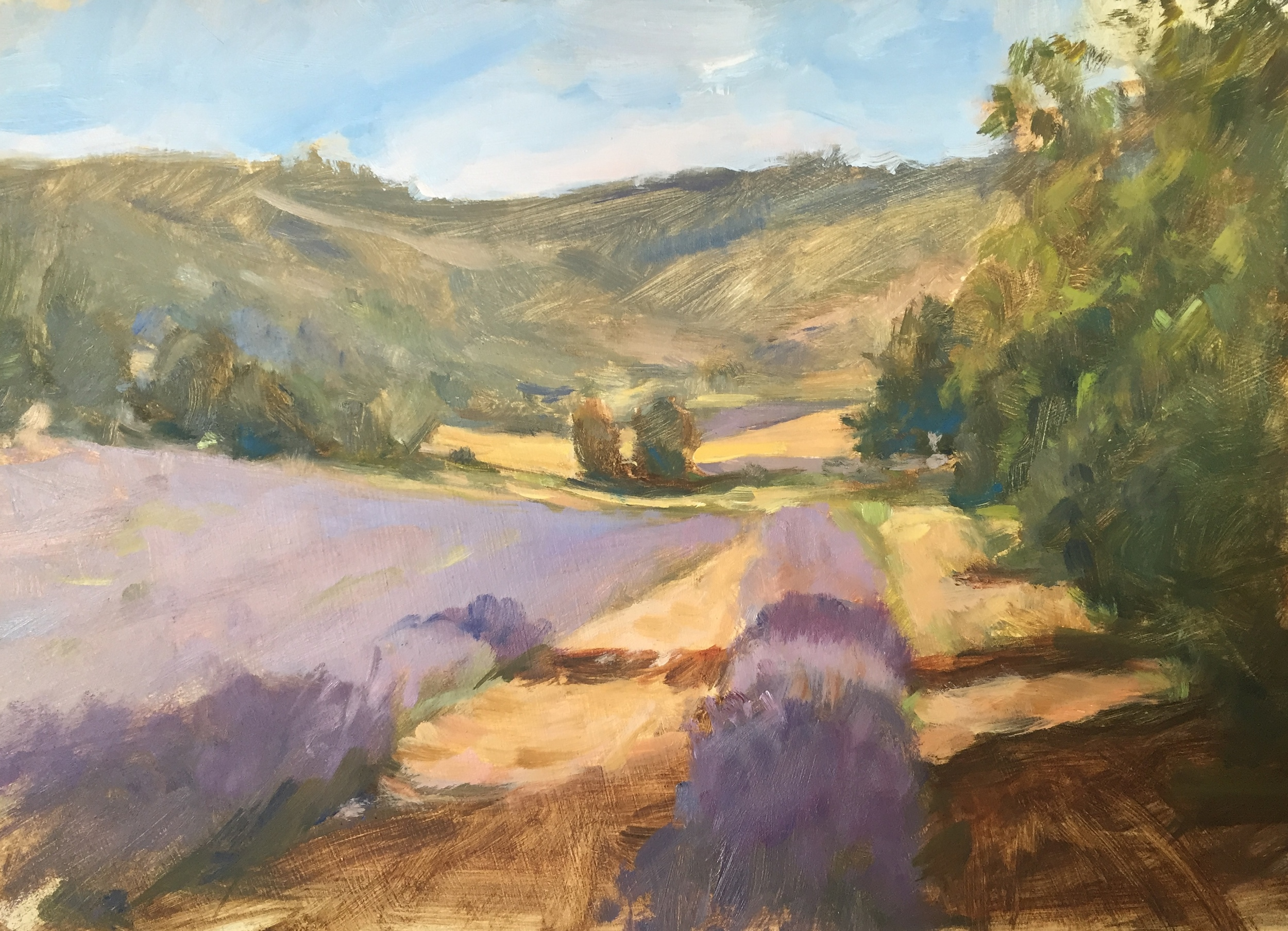 Morning in the Lavender Fields, Sault, Provence