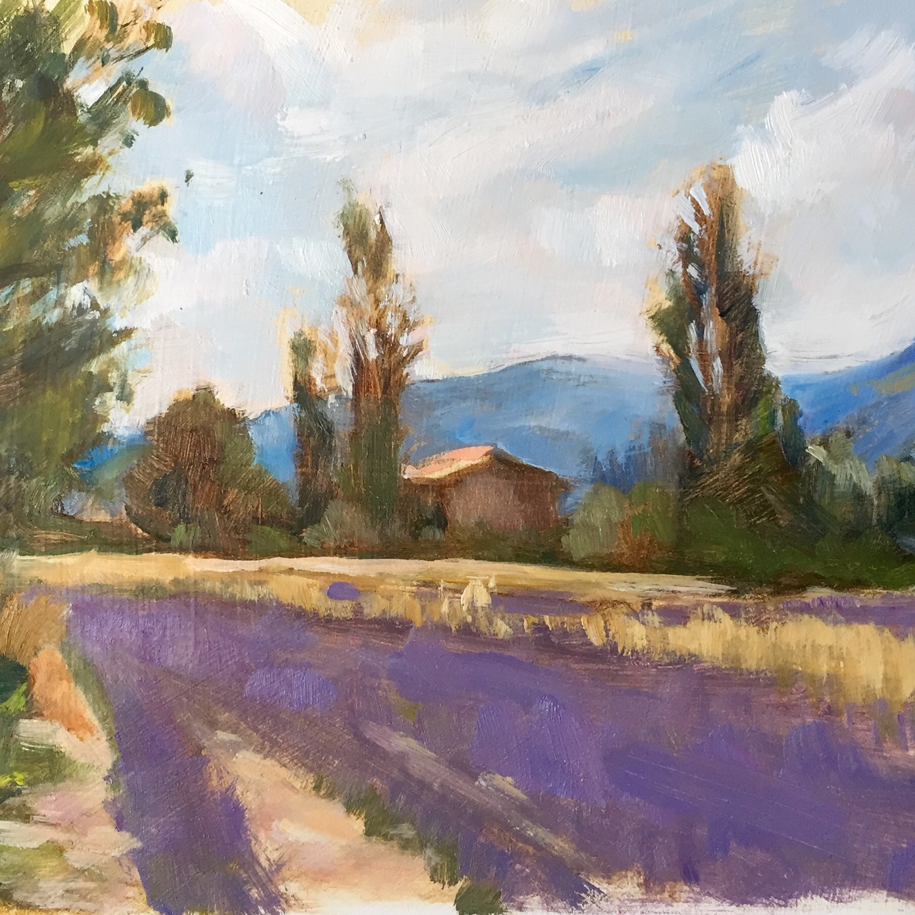 Cabanon in the Lavender Fields, Vallée de Sault