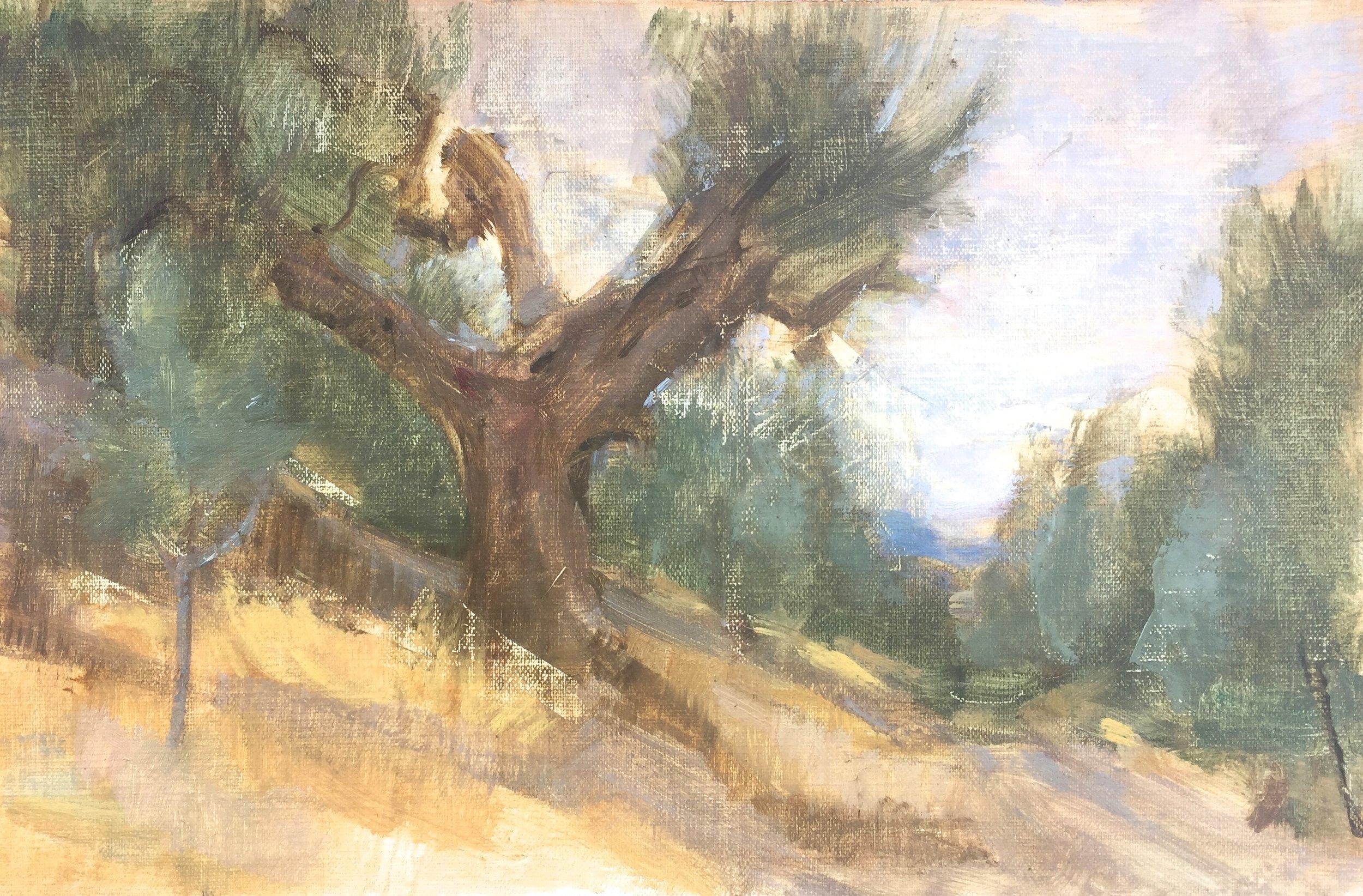 Spedalone Olive Grove, Tuscany