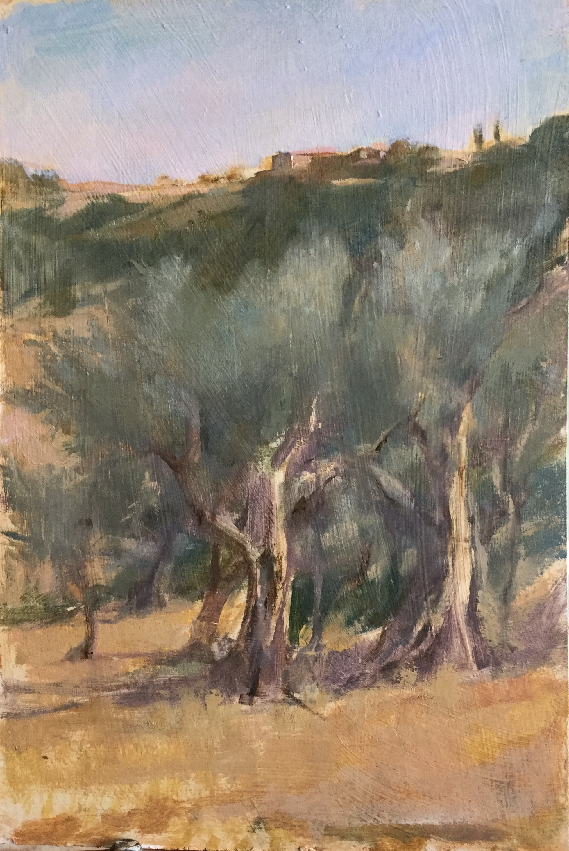 Olive Trees at Podere Spedalone, Tuscany