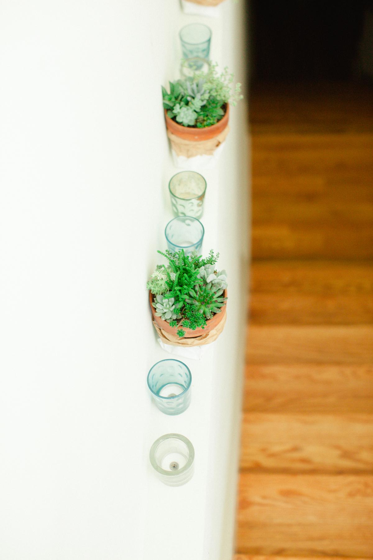Succulents |  Sawyer Baird