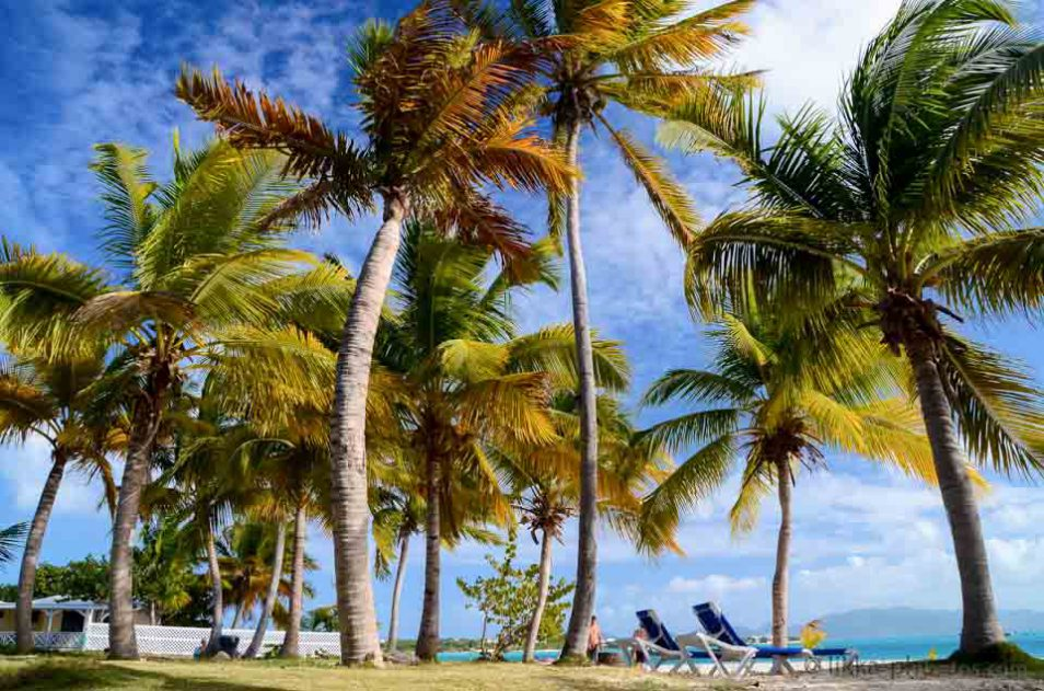 Anguilla-bwi-14.jpg