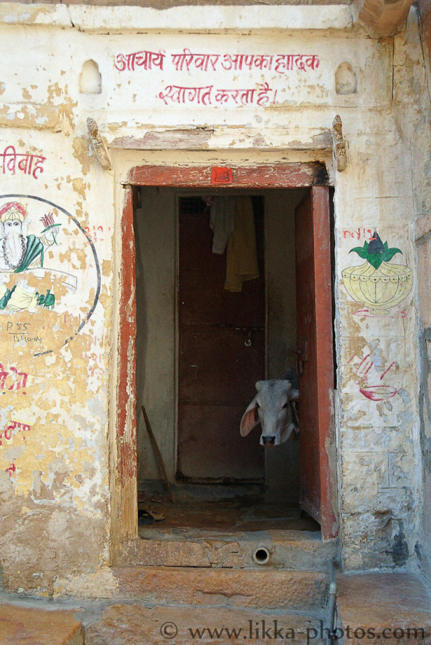 India-17.jpg