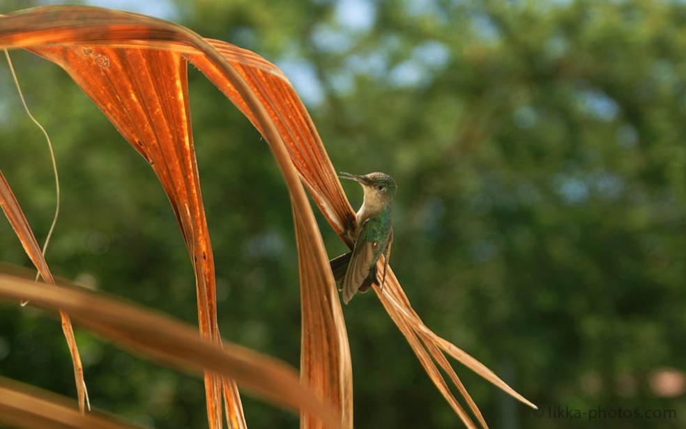 Bird-Caribbean-2.jpg