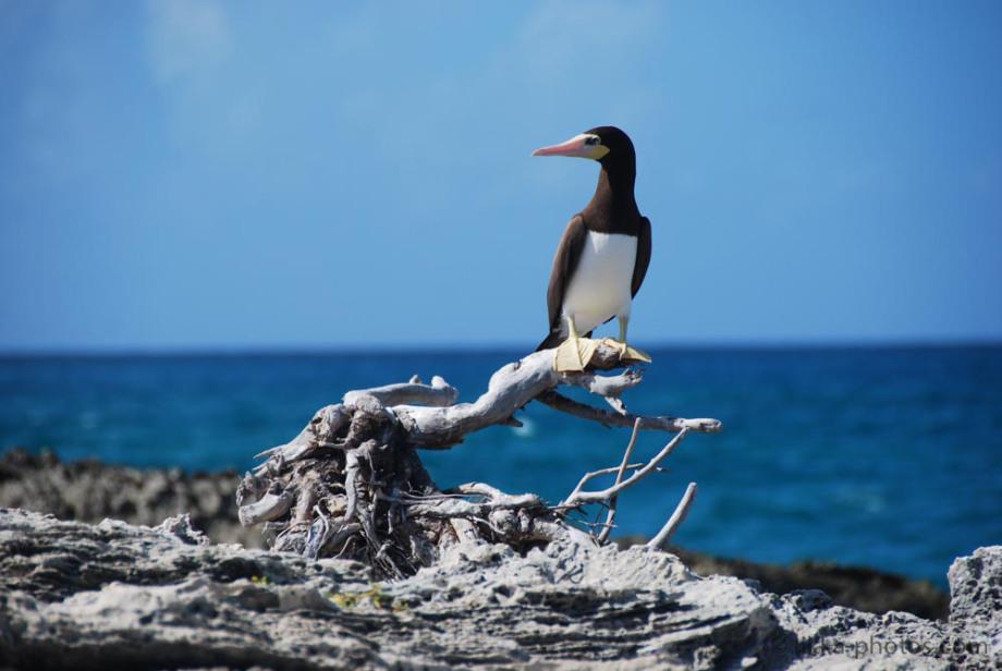 Bird-Caribbean-6.jpg