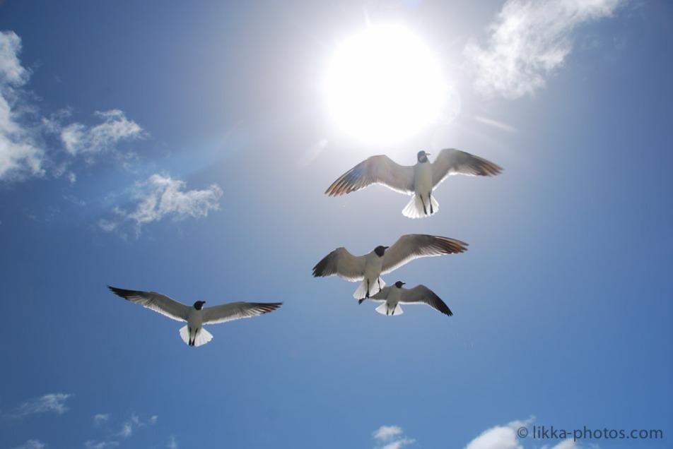 Bird-Caribbean-17.jpg
