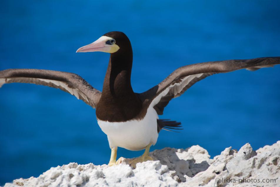 Bird-Caribbean-18.jpg