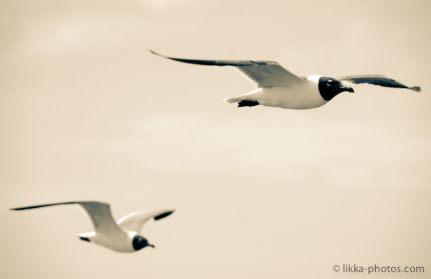 Bird-Caribbean-22.jpg