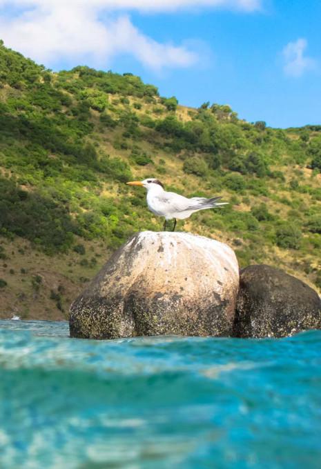 Birds-Caribbean-2-2.jpg