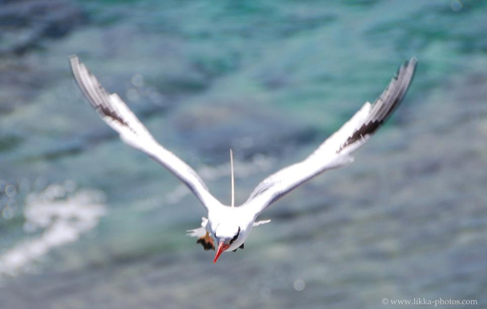 Bird-Caribbean.jpg