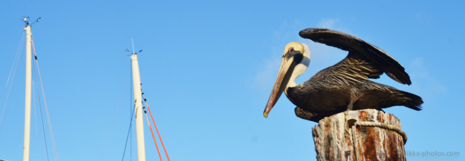 Birds-Caribbean-10.jpg