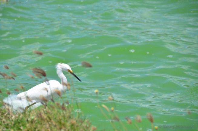 Birds-Caribbean-9.jpg