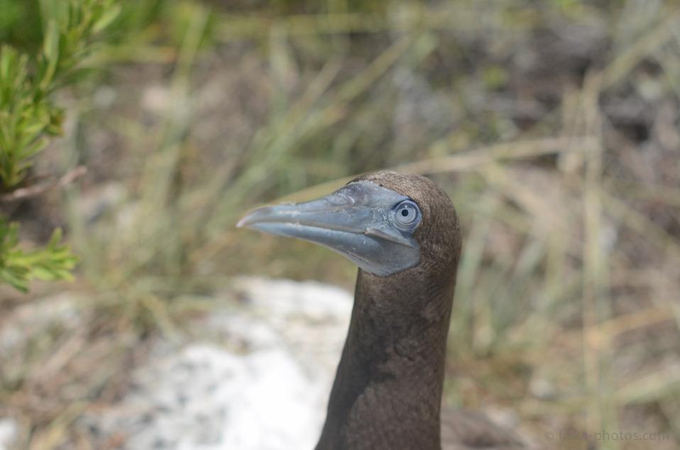 Birds-Caribbean-11.jpg