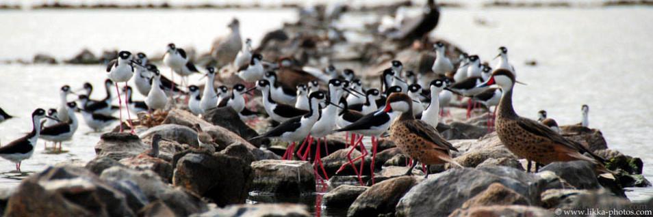 Birds-Caribbean-18.jpg