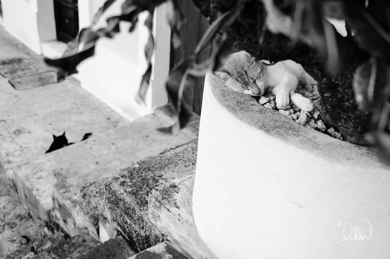 black-and-white-likka-29.jpg