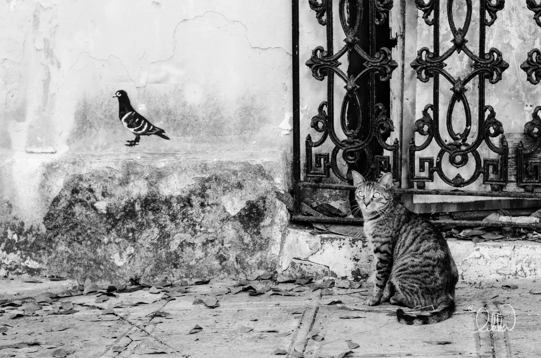 black-and-white-likka-30.jpg