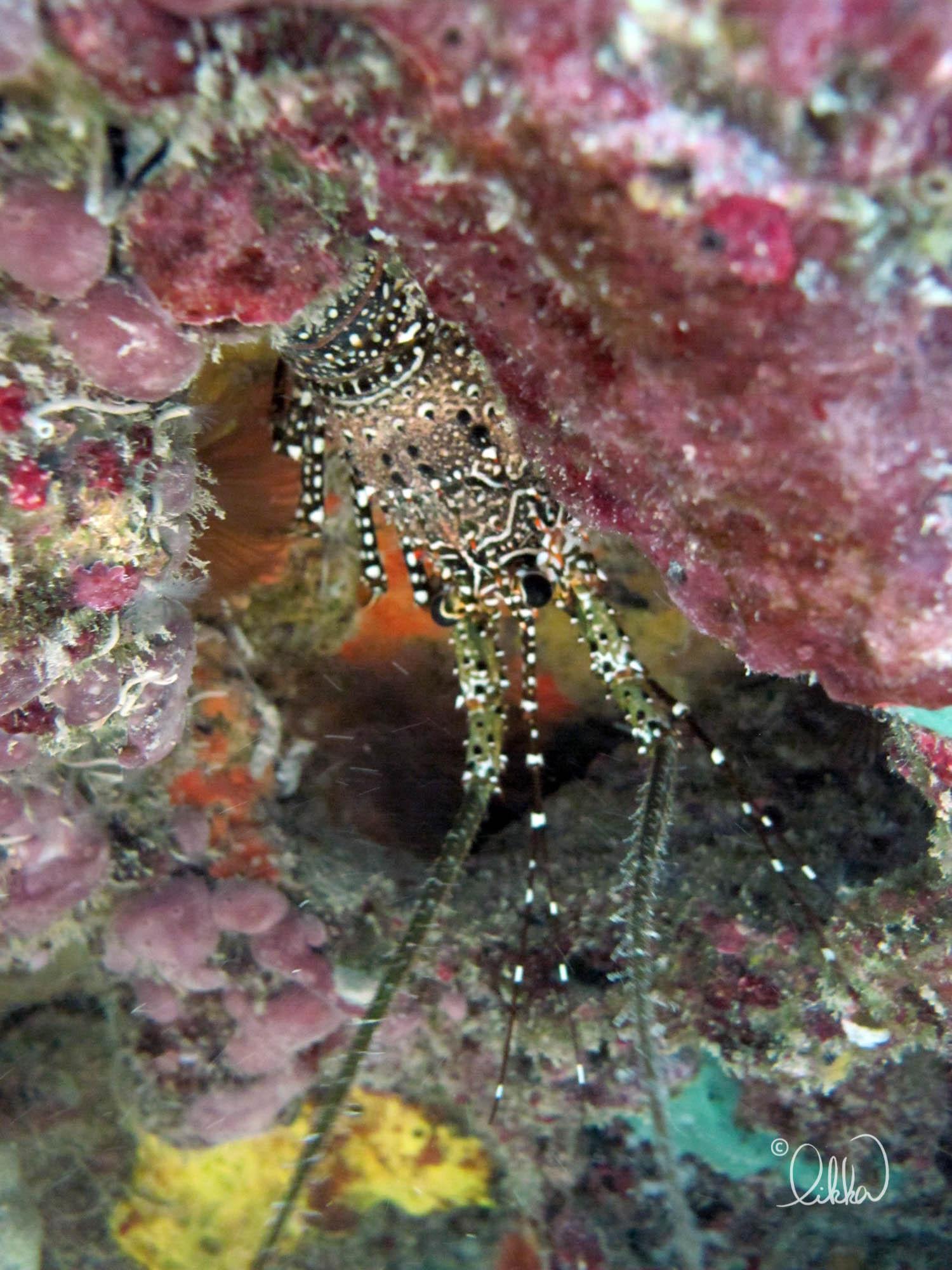 underwater-snorkeling-fish-likka-8.jpg