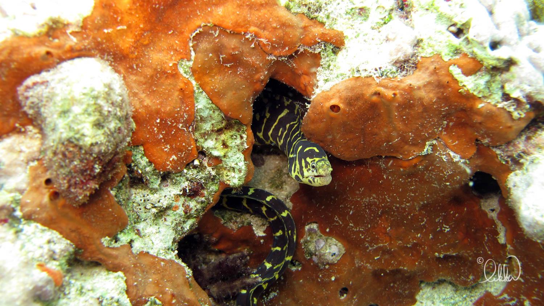 underwater-snorkeling-fish-likka-39.jpg