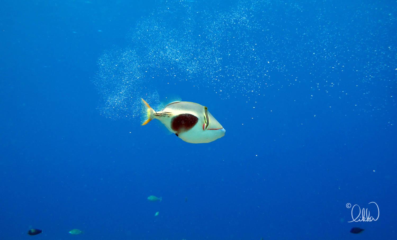 underwater-snorkeling-fish-likka-50.jpg