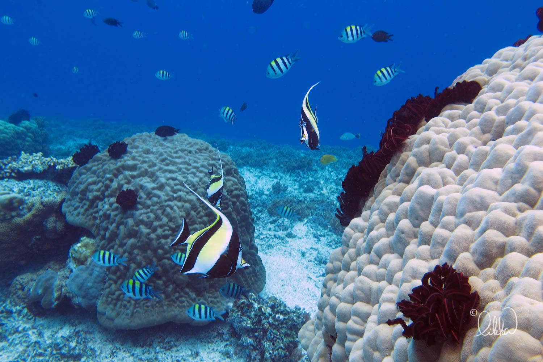 underwater-snorkeling-fish-likka-49.jpg