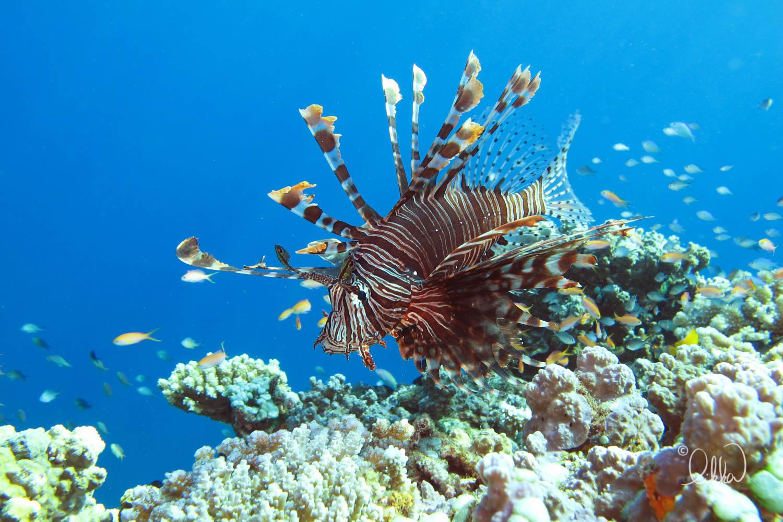 underwater-snorkeling-fish-likka-63.jpg