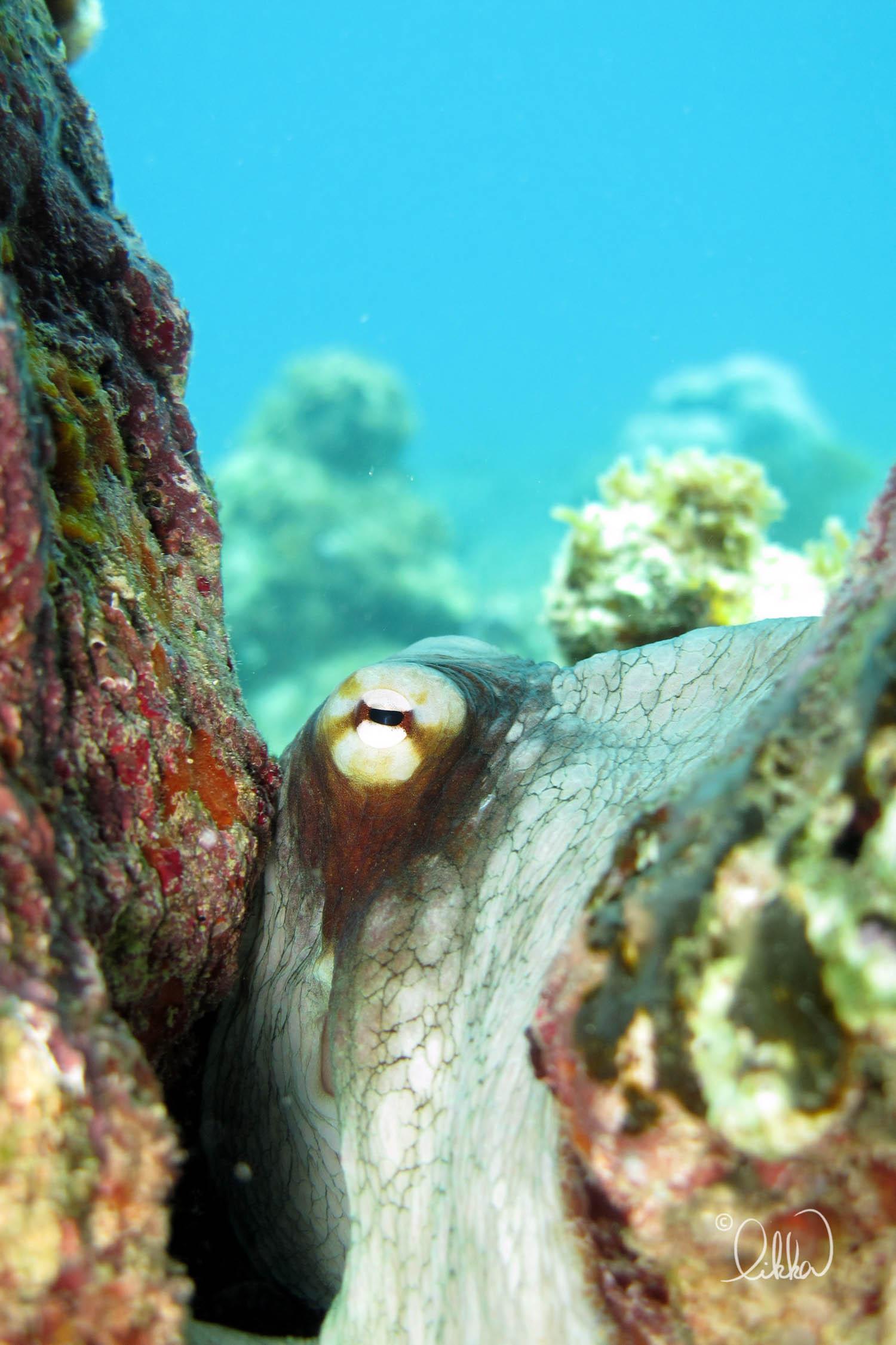 underwater-snorkeling-fish-likka-70.jpg