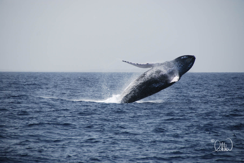 whales-sharks-dolphins-likka-5.jpg