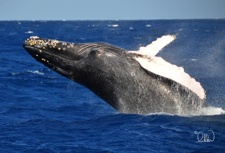 whales-sharks-dolphins-likka-7.jpg