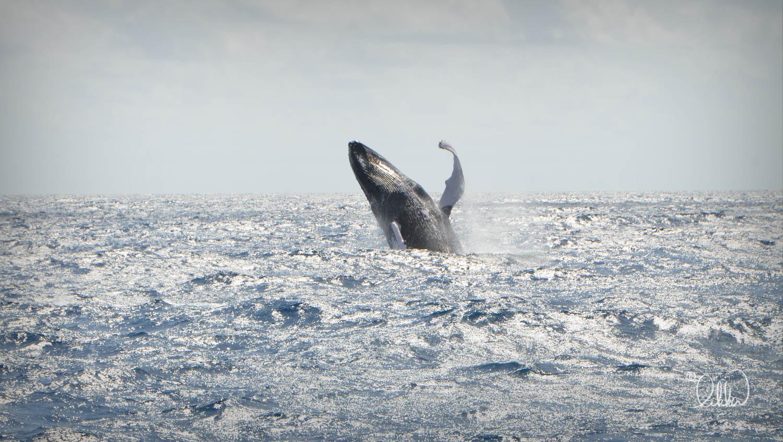 whales-sharks-dolphins-likka-18.jpg