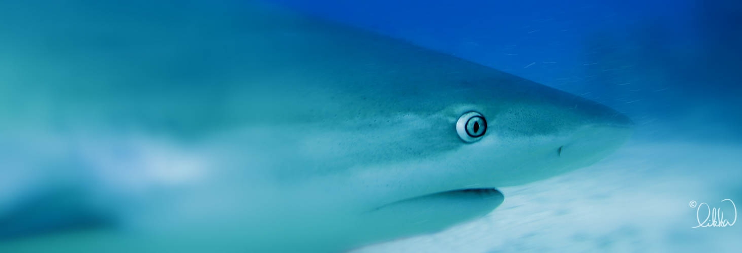 whales-sharks-dolphins-likka-20.jpg