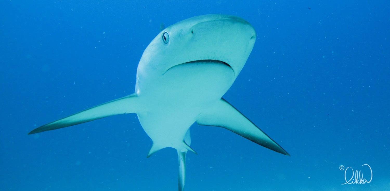 whales-sharks-dolphins-likka-28.jpg