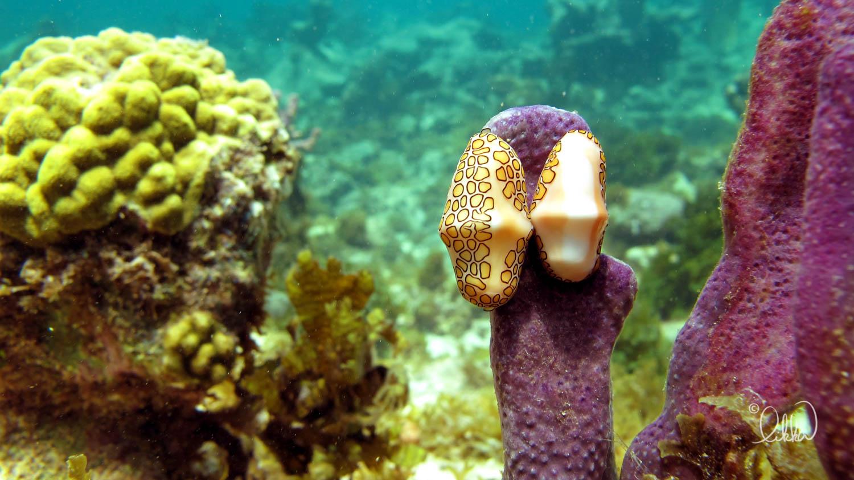 underwater-snorkeling-fish-likka-12.jpg