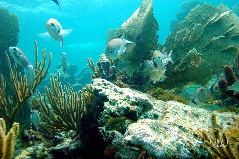 underwater-snorkeling-fish-likka-2.jpg