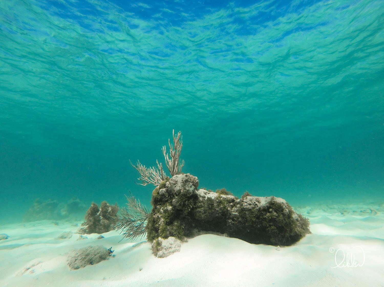 underwater-snorkeling-fish-likka-78.jpg