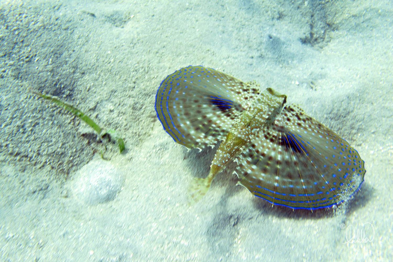 underwater-snorkeling-fish-likka-81.jpg