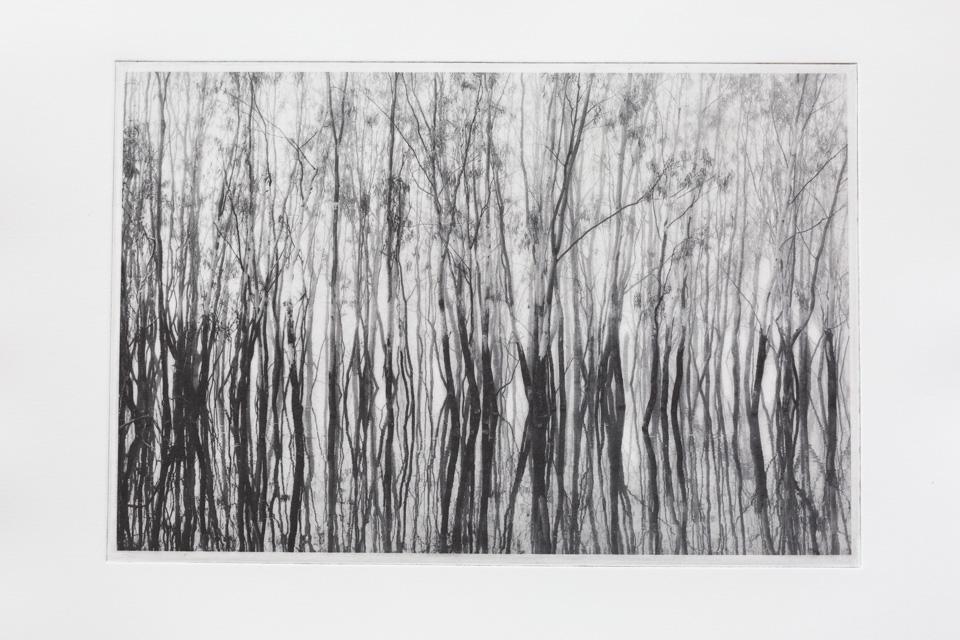 Hattah-Trees1.jpg