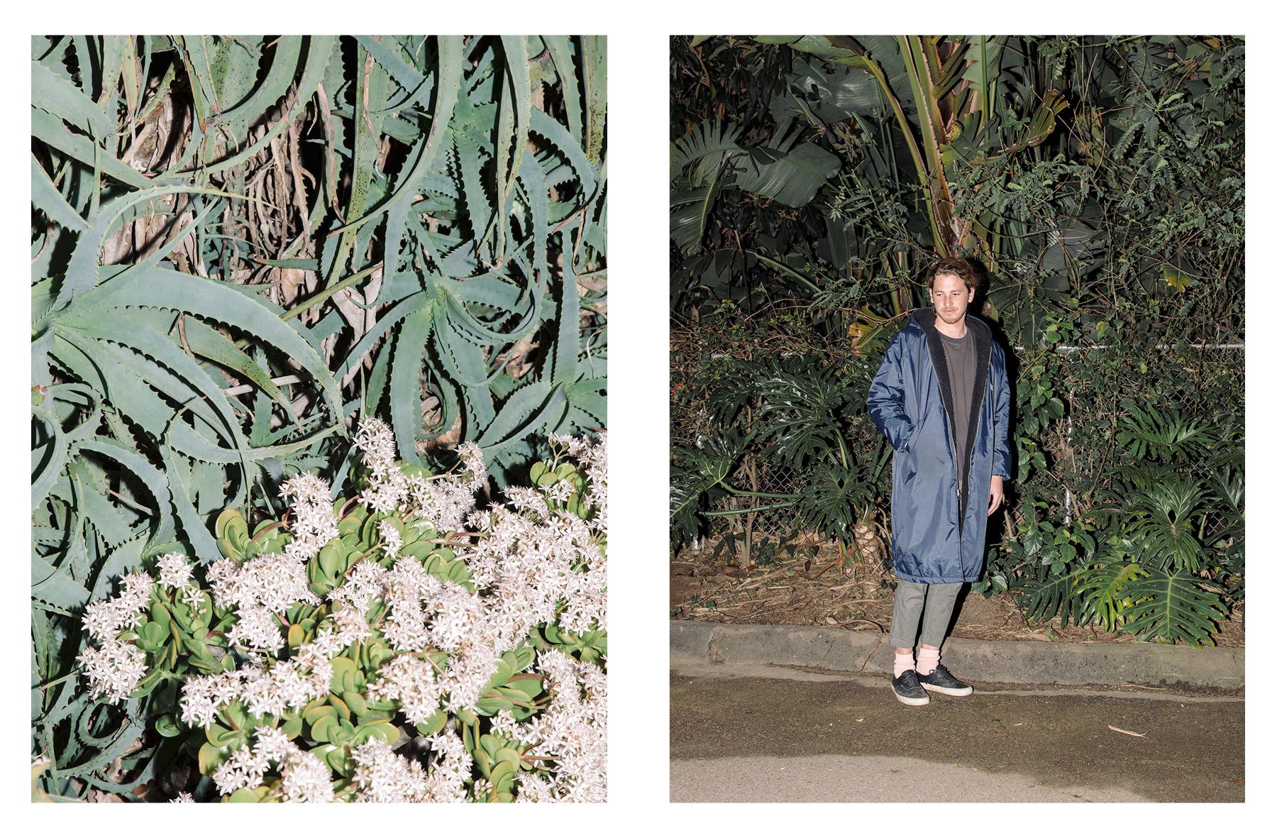 Night Plant_2.jpg