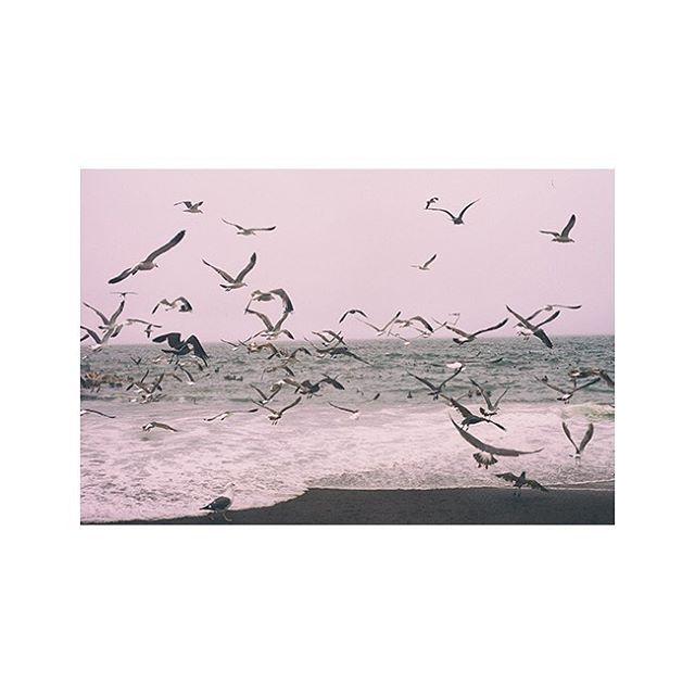 #flock