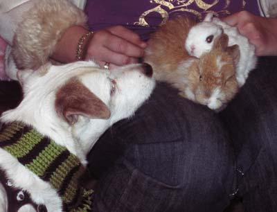 441-bunnies.jpg