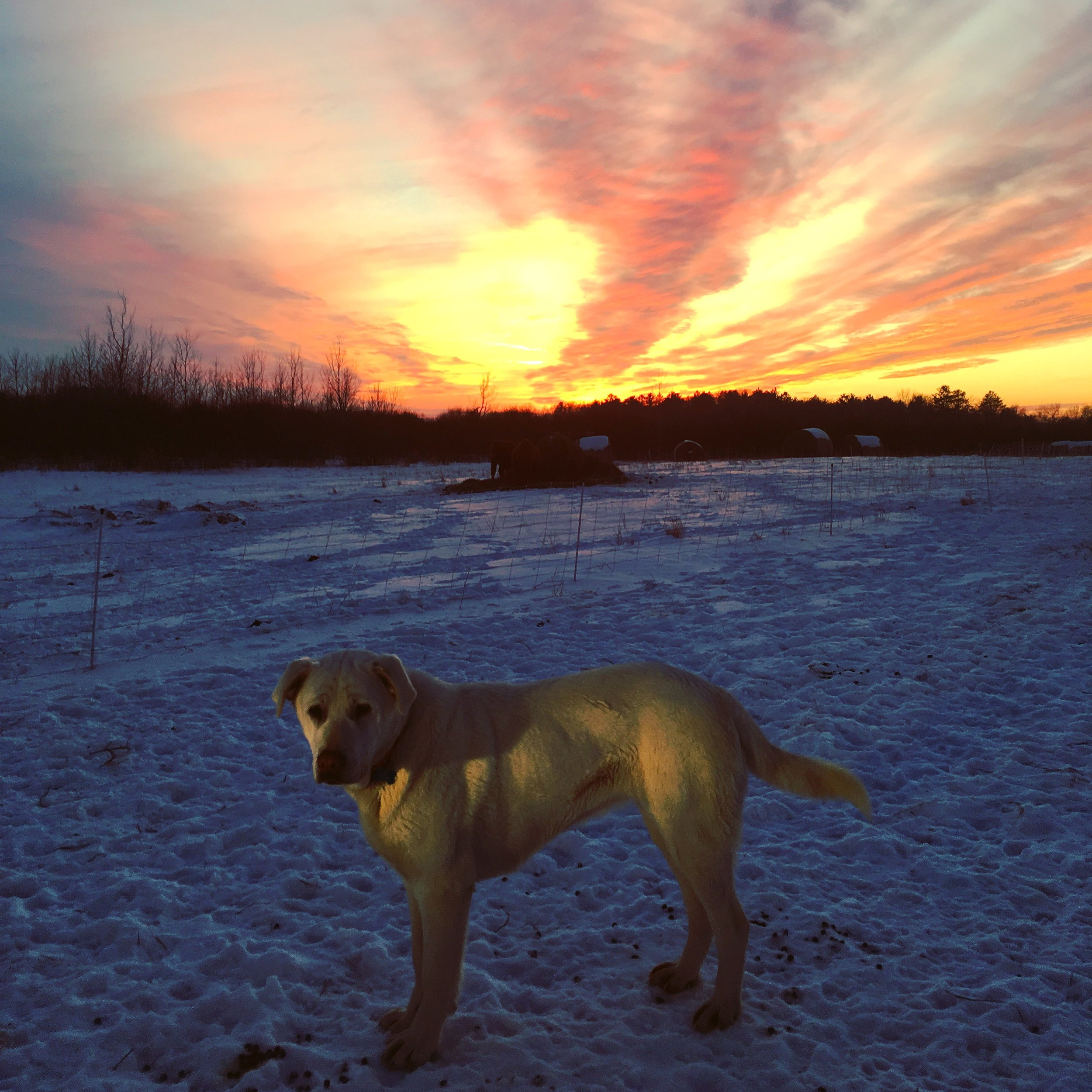dogs - polly sunset.JPG