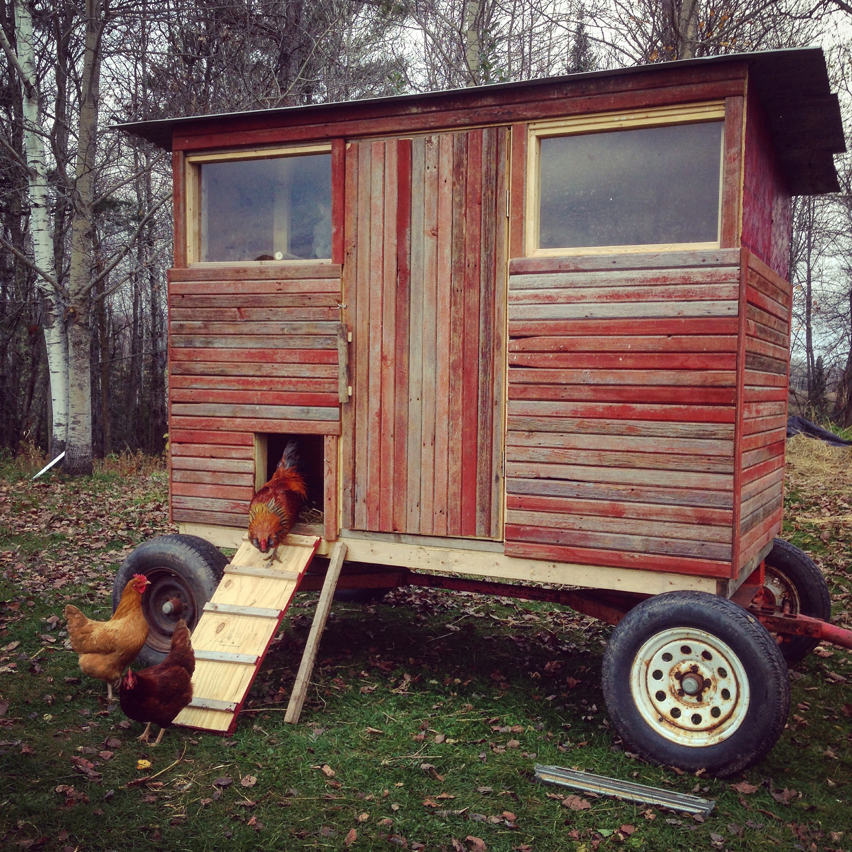chickens - mobilecoop.JPG