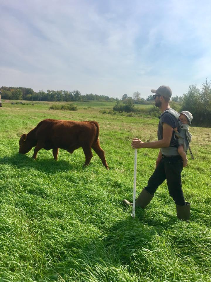cows - JasonandHarvey.jpg