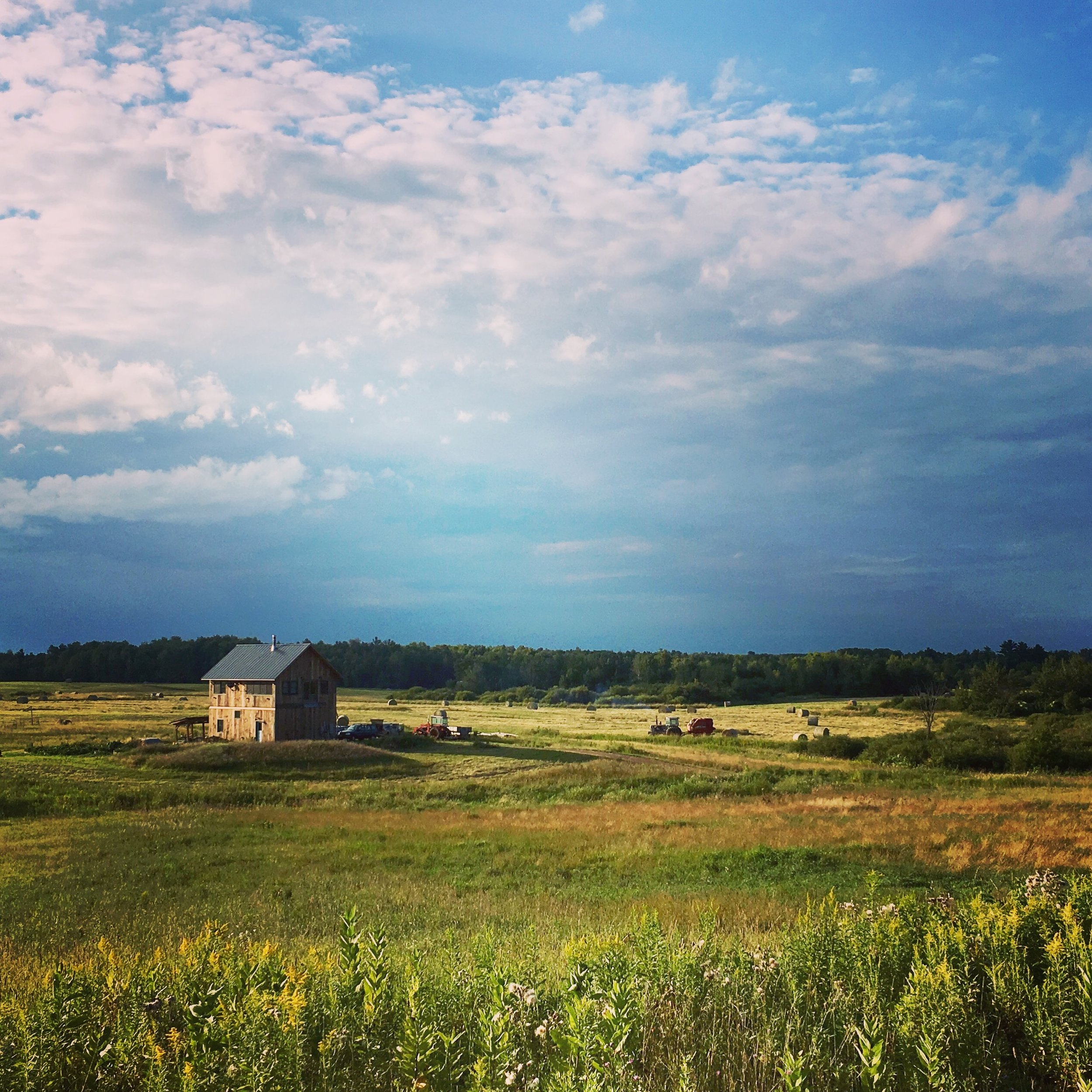 pasture - putting up hay.JPG