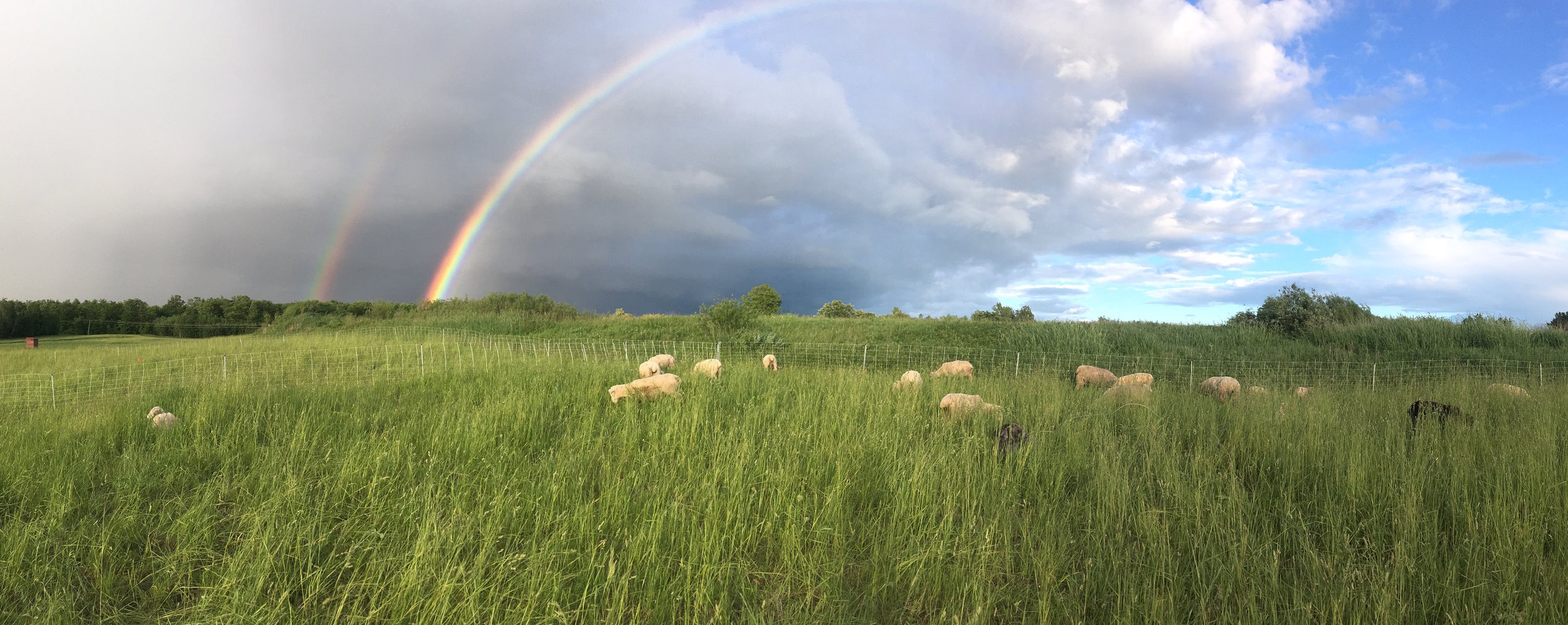 pasture - rainbow.jpg