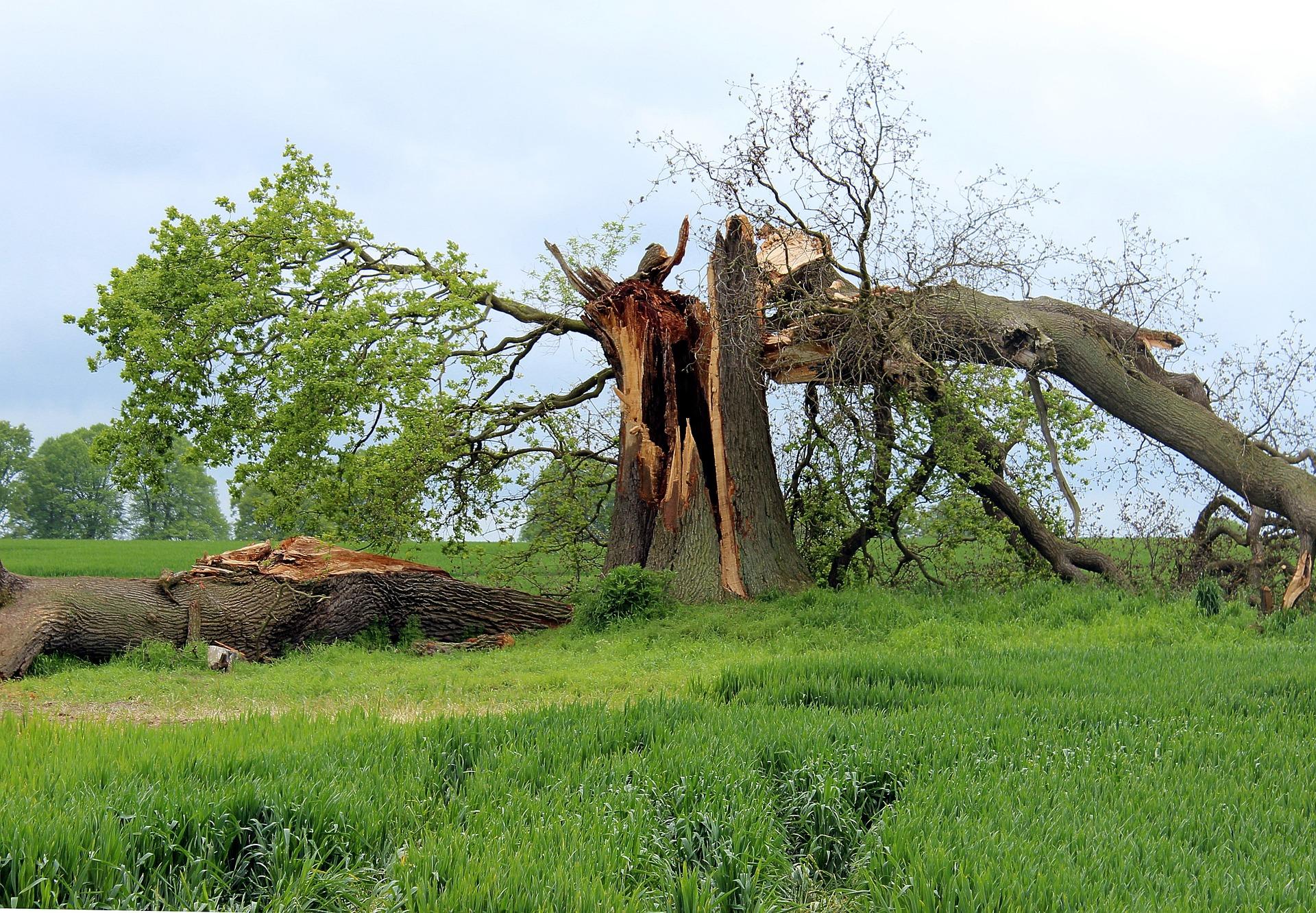 #141 Storm Damaged Tree