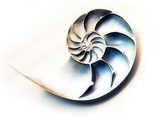classic shell_2.jpg