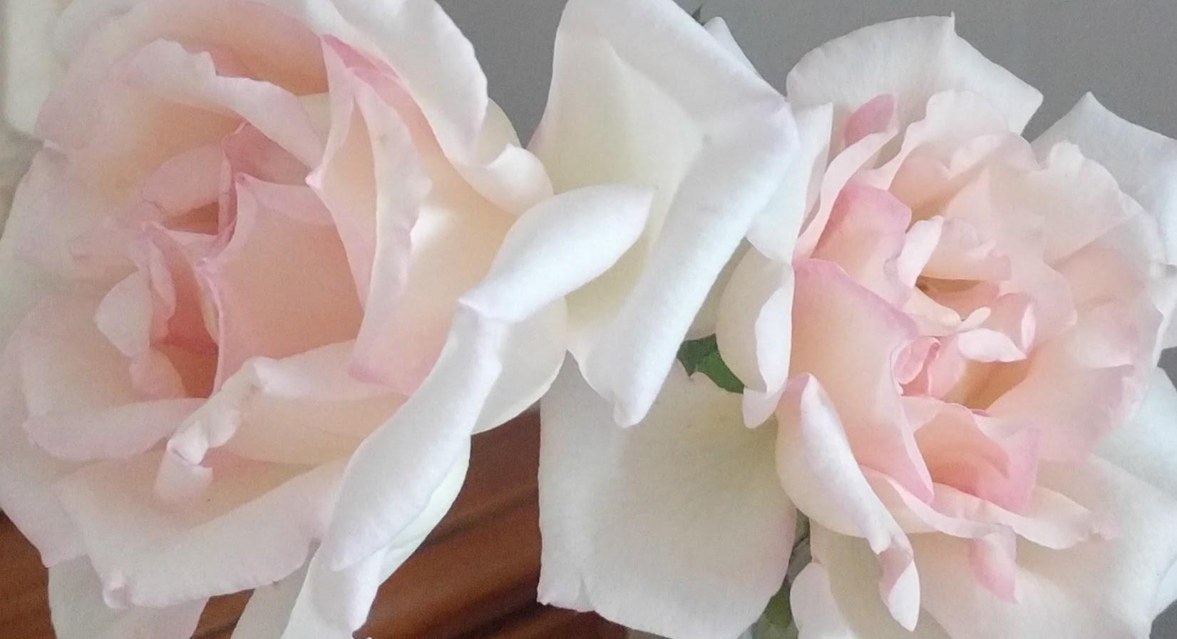 RoseMenu.jpg