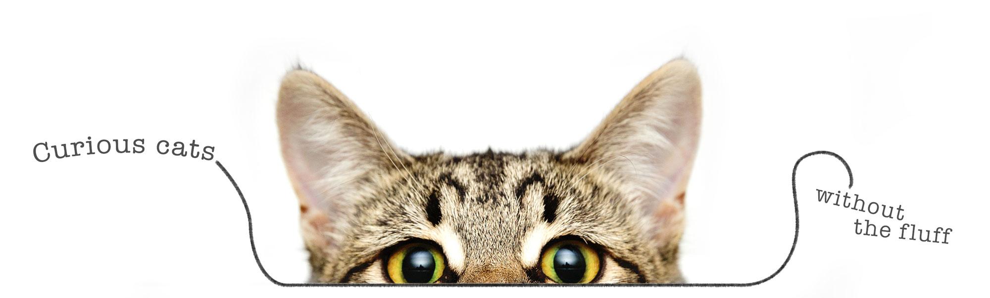CuriousCat.jpg